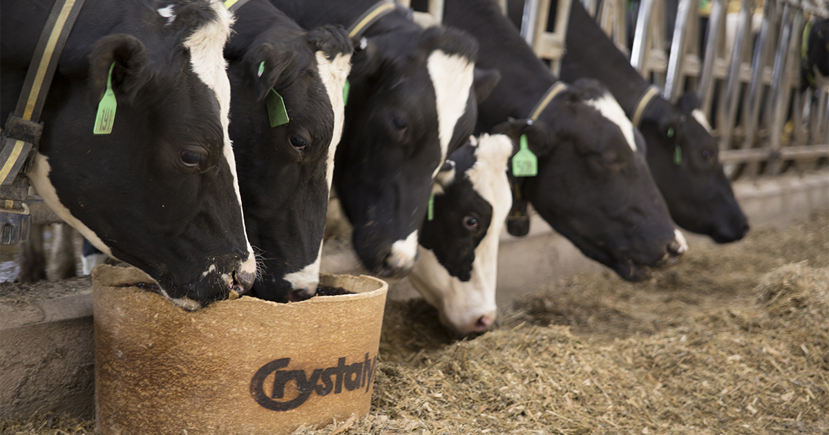 070318-Dairy-Cattle-Image.jpg