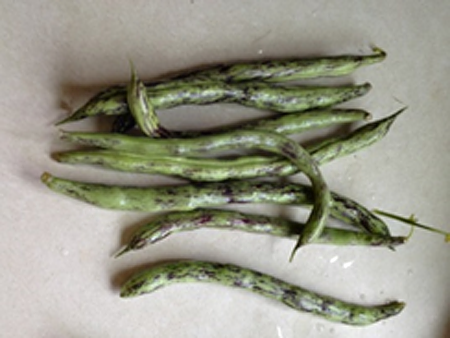 Bicolored beans_082614.png