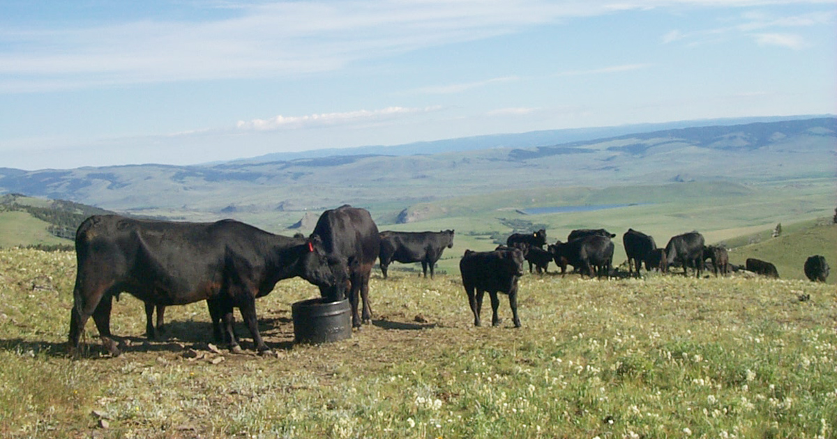061119-Grazing management modifying cow movement-IMAGE.jpg