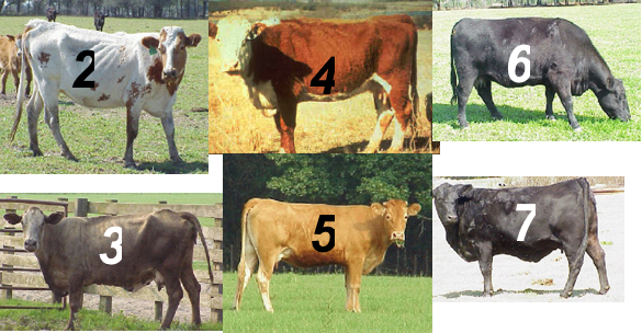 Numbered cattle_083011.png