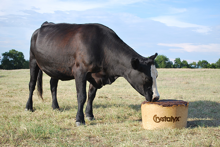 Crystalyx_Cow on BioBarrel.jpg