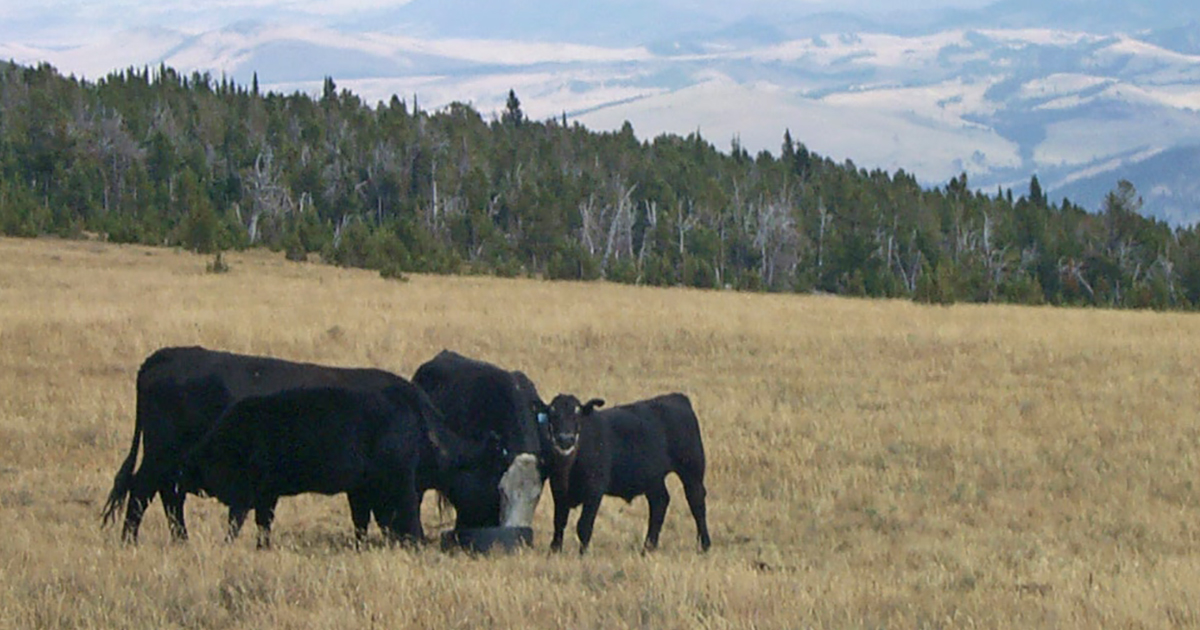 090420-Managing-Pasture-Image-FB.jpg