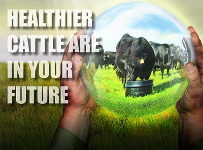 051016-Healthier-Cattle-In-Future.jpg